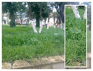 jardin2-300x228
